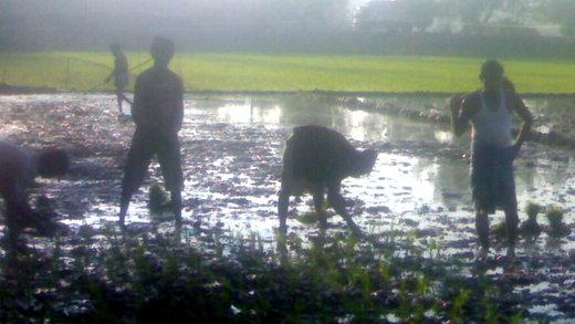 灌漑井戸により潤い始めた農地