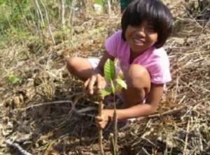 パロンバネス植林