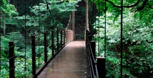 高尾山 吊り橋