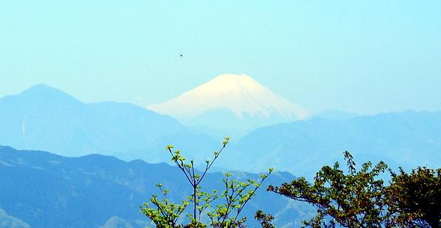 高尾山頂から望む富士山