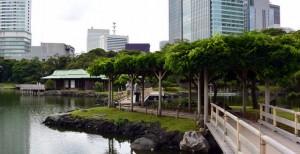 浜離宮:お伝い橋と潮入の池