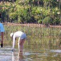 フィリピン マングローブ植林ツアー