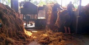 ココナッツを粉砕し、繊維を取り出す
