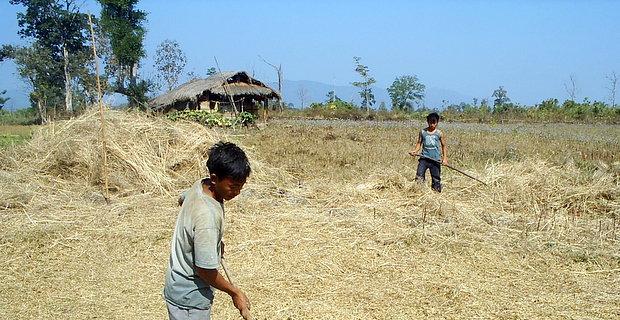 ミャンマーの風景 - 農作業