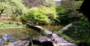 小石川後楽園: 「渡月橋」と「西湖の堤」