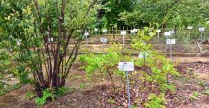 小石川植物園: 薬園保存園
