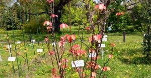 小石川植物園: 分類標本園