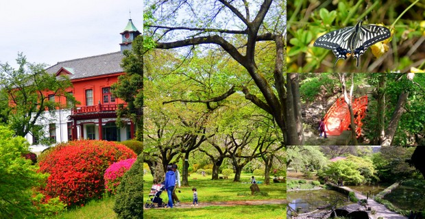 小石川植物園・後楽園チャリティウォーク