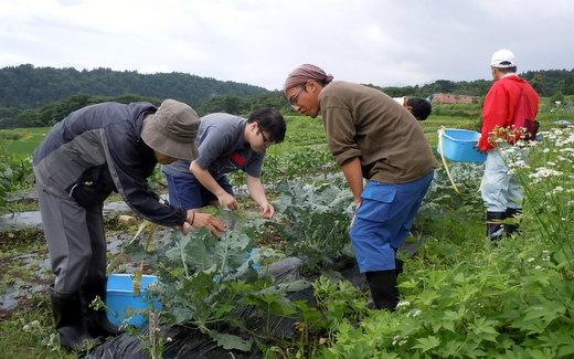 小谷村ワークキャンプ プロッコリー畑