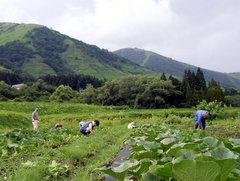 第6回小谷村 カボチャ畑の雑草とり