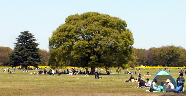 昭和記念公園ウォーカソン