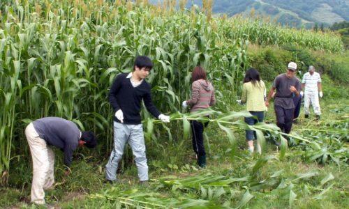 第3回小谷村ワークキャンプ
