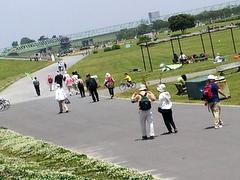 江戸川土手の散策