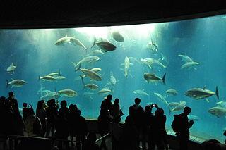 葛西臨海公園 水族園