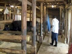 小谷村 共働学舎 厩舎のお掃除