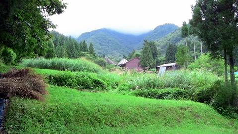 真木の風景