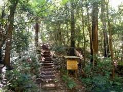 トトロの森 1号地