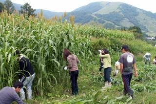 第3回小谷村ワークキャンプ 「もろこし」の刈り取り