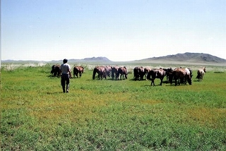 貧農のモンゴル村民の自立のために